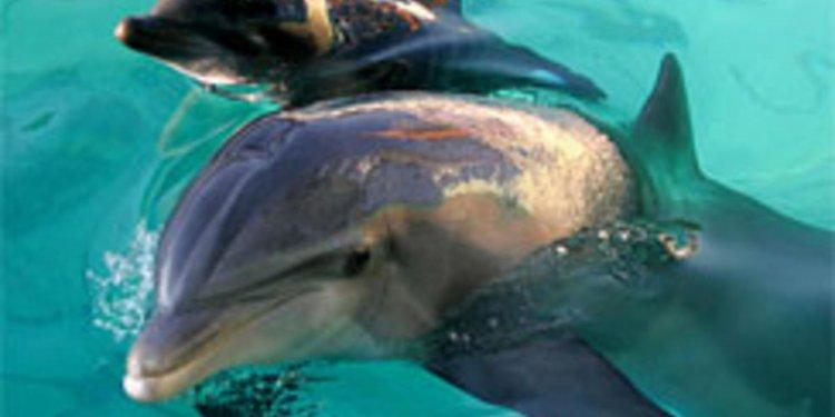 Gulf Oil Spill - CBS News