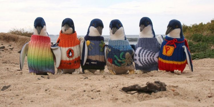Check Out These Tiny Penguins