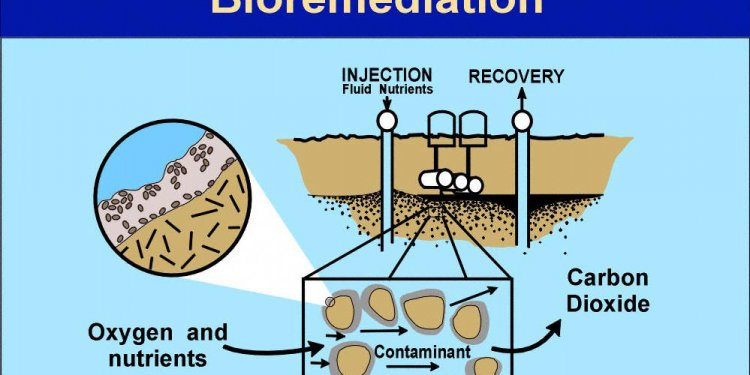 Process of bioremediation