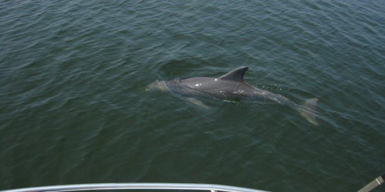 Gulf Coast Surveillance
