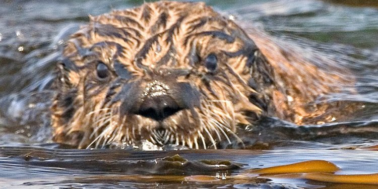 It only takes otters 25 years