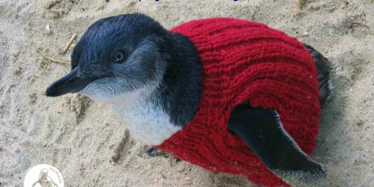 Knit A Penguin A Sweater And