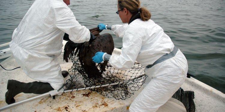 Resucing a pelican
