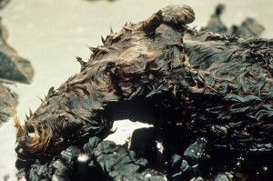 Dead Oiled Sea Otter After the Exxon Valdez Oil Spill