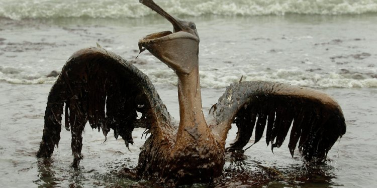 Effects of oil spills on the environmental