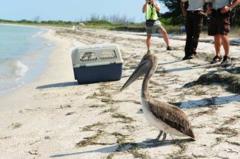 Gulf Oil Spill Update: Just the Facts