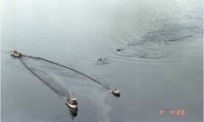 Killer whales cycling alongside boats skimming oil from the Exxon Valdez oil spill.