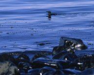 1989 Exxon Valdez oil spill facts