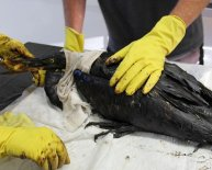 Animals affected by oil spills