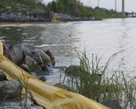 Bacteria used in oil spill clean up
