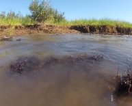 Deep Water Horizon oil spill environmental impact