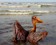 Deepwater Horizon oil spill cleanup