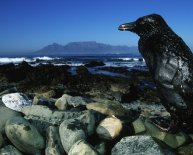 Marine pollution oil spills